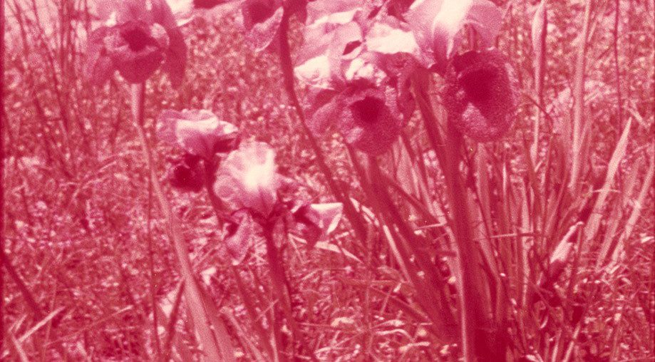 "<span class=""slider-name""><a href=""http://www.ldm.lt/izraelio-siuolaikinio-menininko-sharono-yaari-fotografiju-paroda-lauku-ir-misku-pozityvai/?lang=en"">The exhibition Positive Images for Field and Forest by the contemporary Israeli artist Sharon Yaari</a></span><span class=""sldier-meta"">17 June 2016 – 4 September 2016</span>"